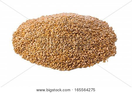 Processed organic golden wheat grains isolated on white background. Lots of seeds, top view. Harvest and farming, bread making agricultural business.