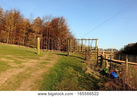 Gates and fences of game rearing pens by larch woodland on the scenic Yorkshire wolds in winter.