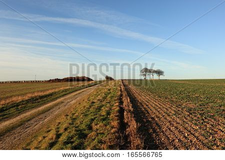 A farm track through farmland leading to beech trees and a trig point on a tumulus or ancient burial mound in the scenic Yorkshire wolds landscape in winter.