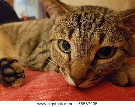 The domestic cat - feline human friends