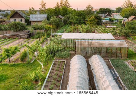 Vegetables Growing In Raised Beds In Vegetable Garden And Hothouses. Summer Season