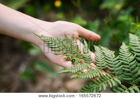 Young Beauty Girl Woman Touching Holding Fern Leaf In Summer Park Forest. Close Up Of Female Hand. Concept Of Nature, Environment Care