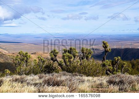 High desert landscape with Joshua Trees, Yucca Plants, and Sagebrush at 5,000 feet elevation taken within the Mojave Desert in Tehachapi Pass, CA