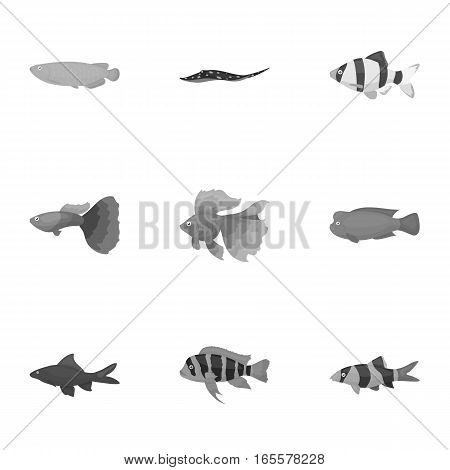 Aquarium fish set icons in monochrome style. Big collection of aquarium fish vector symbol stock