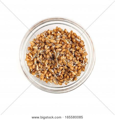 Sprouted Wheat In The Glass Bowl Isolated On White Background