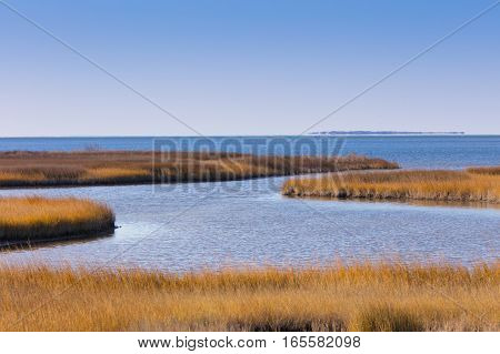 Pea Island National Wildlife Refuge Salt Flats Wildlife Trail North Carolina USA