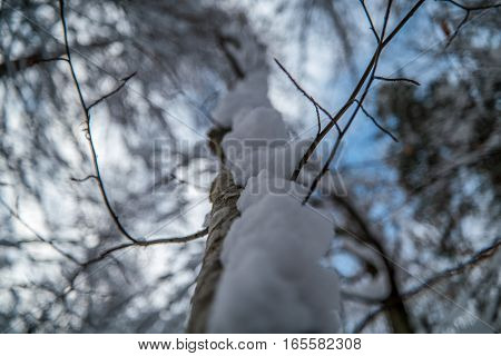 Tree Covered In Snow