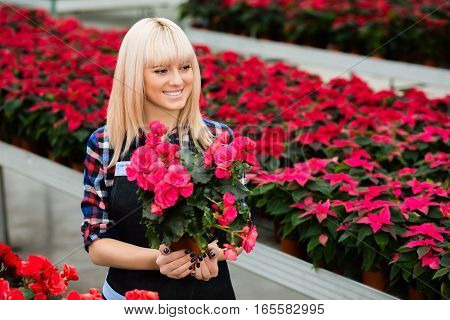 garden center worker carries a red pot flower, happily looking away