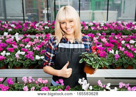cheerful woman gardener worker showing thumbs up holding poted flower and standing in a flower shop.