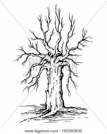 Vector sketch krona and trunk of a tree without leaves.
