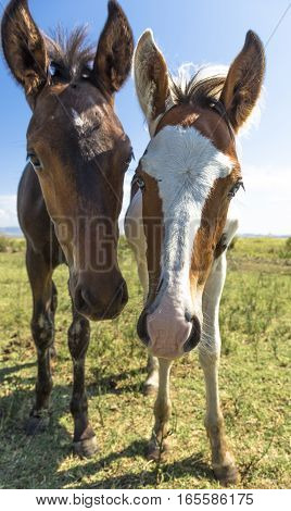 Brown and pinto foals grazing near the sea in Puglia (Italy)