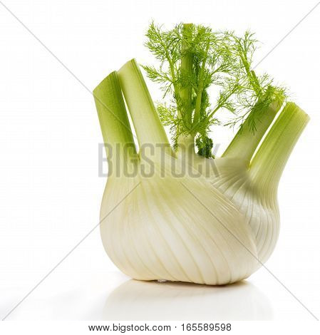 Closeup fresh fennel bulb isolated on white background.