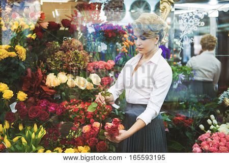 Skillful female florist is choosing rose from other flowers. She is standing and looking at plant with admiration. View from showcase