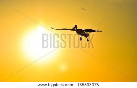 Pelican flying with open wings at sunset sky, silhouette.
