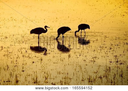 Silhouette of Cranes with Reflections in Water