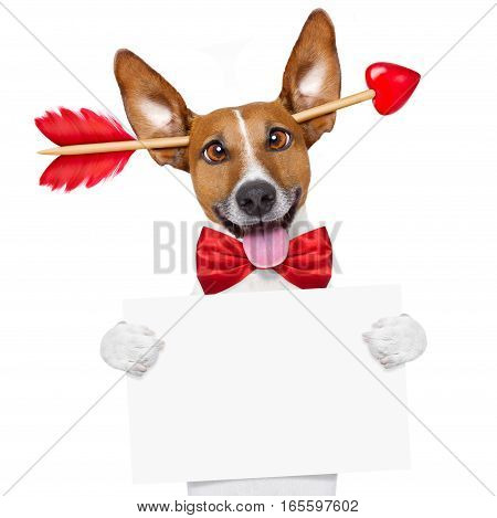 Valentines Day Dog Crazy In Love