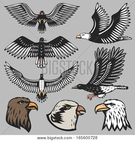 Eagle vector animal head predator silhouette illustration. Abstract national force america freedom nature. Wildlife usa insignia mascot falcon shape.