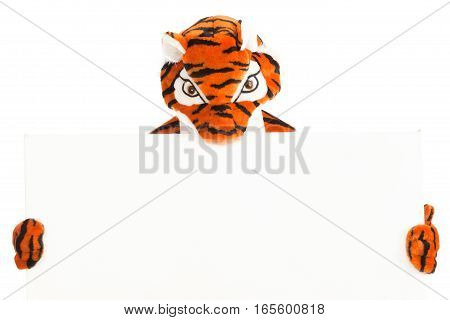 studio shot of a not so wild tiger holding a blank sign