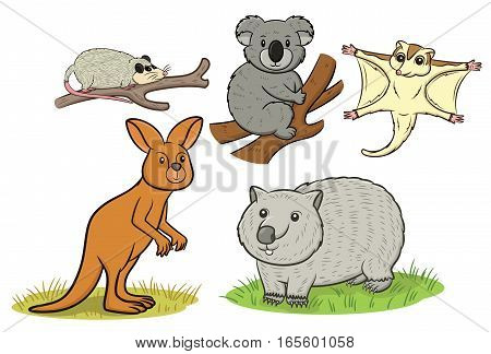 Marsupial Animals Set Cartoon. Possum Koala Sugar Glider Kangaroo and Wombat Vector Illustration.