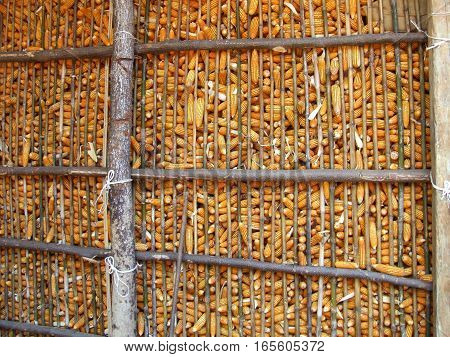 stock of dry corn in granary in contryside of Thailand