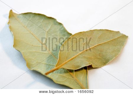 Two Bay Leaves