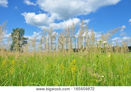 A background with a colorful bright meadow grass with blue sky and clouds background. A meadow is composed of grasses and wildflowers. Meadow Benefits. A meadow garden has many benefits.