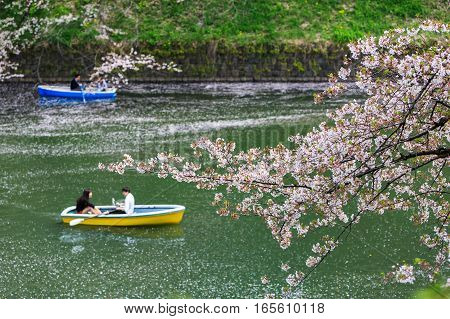 Cherry blossom at Chidorigafuchi Park Tokyo Japan. a famous Tourist spot in Tokyo Japan.