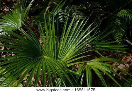 Palm Tropical Exotic Plant Green Earth Dead Leaf