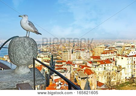 The View With A Gull