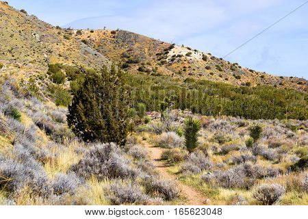 Juniper Woodland, Joshua Trees, and Sagebrush taken on a High Desert plain at 4,000 feet elevation taken in Tehachapi Pass, CA