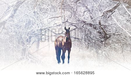 Photo of brown horse in winter landscape with trees