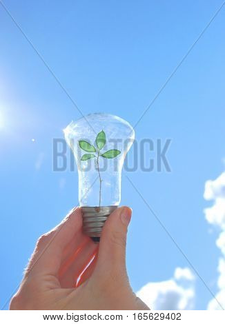 hand holding light bulb with sprout inside. The concept of ecology and solar energy.