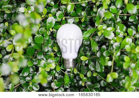 LED Bulb with lighting in the green nature - Eco friendly concept