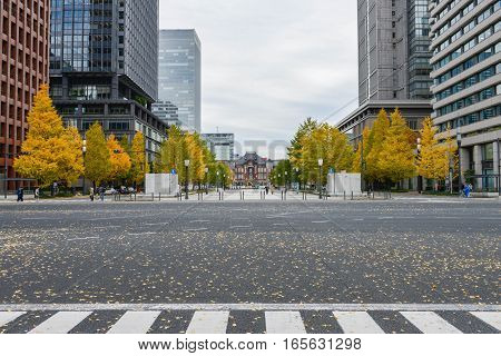 December 2016 in Japan - The road at front of Metro Tokyo station with yellow leaves of Ginkgo trees