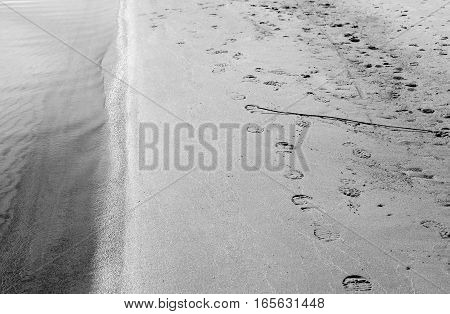 The beach with footprints in the sand the Karelian Isthmus Russia. Black and white.