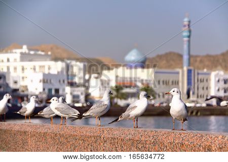 MUSCAT, OMAN: Seagulls at Muttrah corniche with  Sur Al Lewatia Mosque in the background
