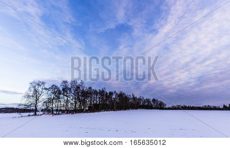 Snowy landscape and alleys. Moravian landscape Tasovice.