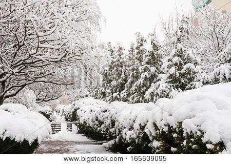 Snow-covered Alley In The Resort Village Vityazevo, Krasnodar Region