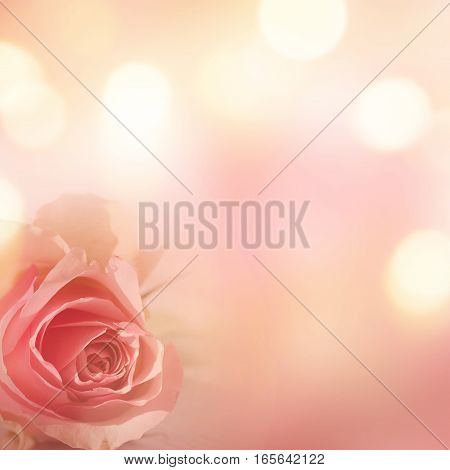 Still life with a tender rose and bokeh for valentines day and mothers day concept
