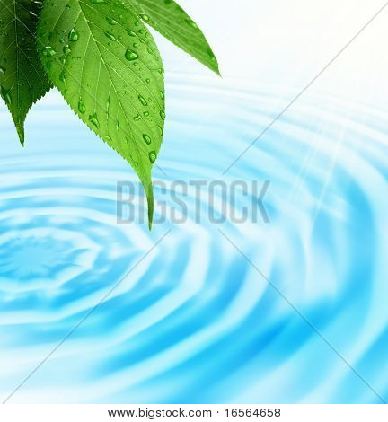 Green fresh leaf with water drop on bright background