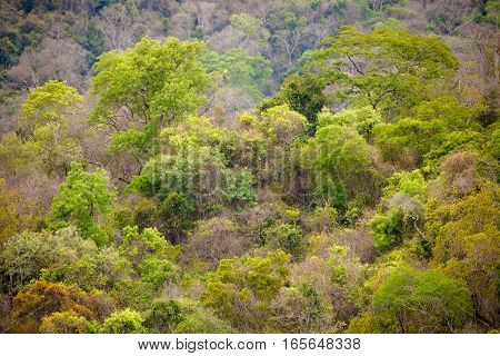 Landscape of rainforest in Ankarafantsika national park woodland with tropical climate Madagascar wilderness
