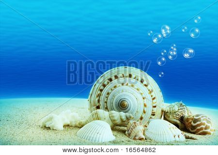 The underwater world,Seashells with underwater background. poster