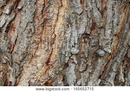 Texture Of Bark Background,tree Texture,wood Background
