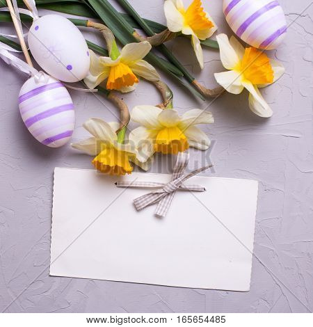 Easter background. Decorative violet eggs and yellow daffodils or narcissus flowers and empty tag on grey textured background. Selective focus. Place for text. Square image.