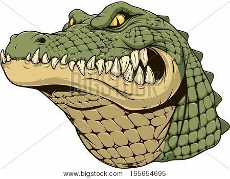 Vector illustration, a ferocious alligator head on a white background.