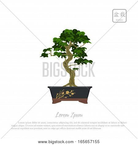 Bonsai tree in pot on white background. Text in japanese Bonsai. Vector illustration
