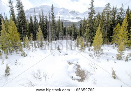Stream Covered With Snow in Winter Canadian Rockies Alberta Canada