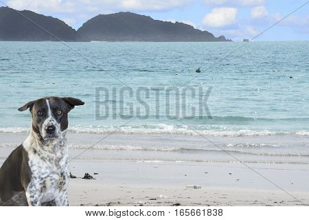 Dog sitting on the beach with sea nature background.