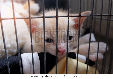 Thailand cat, cats aged 1-4 months, adorable cat.