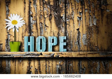 Word text hope and vase with daisy on the shelf on worn wooden background. Concept of hope in something. Contrast between the grunge background and significance of elements lying on the shelf.